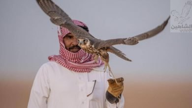 صورة صحراء الحماد بالحدود الشمالية .. ملتقى الصقارين السنوي
